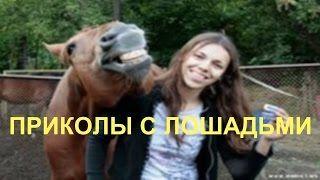 Смотреть онлайн видео Самые смешные лошади! Приколы с лошадьми.
