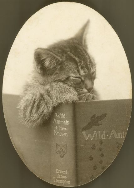 Cat with Book: Animals, Cats And Books, Books Books Books, Crazy Cat, Kitties, Photo, Kitty