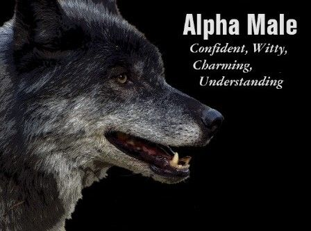 """""""Imagine two wolf packs, or two human tribes,"""" veteran wolf researcher Rick…"""