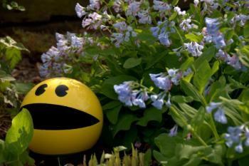 Pac Man Bowling Ball                                                                                                                                                                                 More