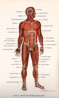 Textbook of Anatomy and Physiology, for all of our Medical professors.