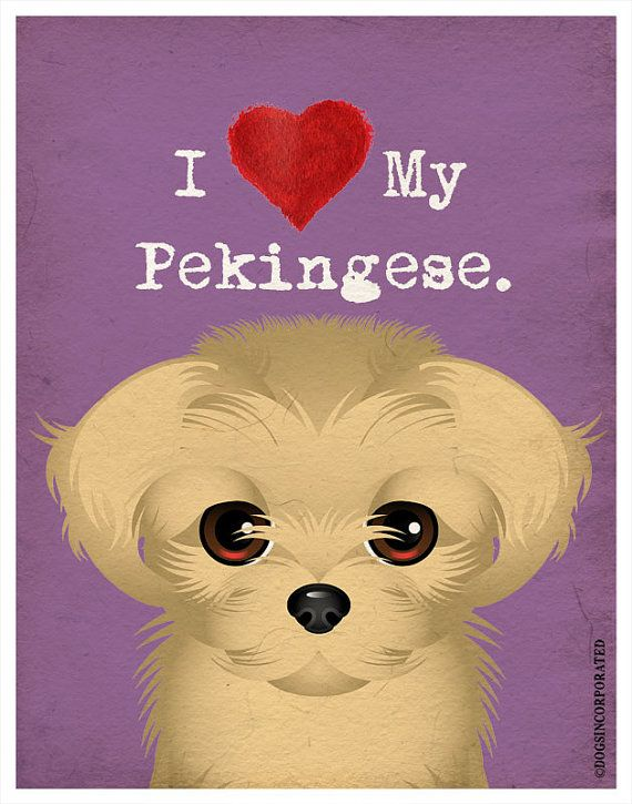 I Love My Pekingese  I Heart My Pekingese  I by DogsIncorporated, $20.00 #Etsy