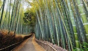 Turistler tarafından oldukça tanınan meşhur bir bölge olan Arashiyama, Japonya'nın Kyto şehrinin batısında bulunmaktadır. Bölge, Heian Dönemi sırasında sınır boylarının güvenliğini sağlayanlar arasında oldukça popüler olmuştur. #Maximiles #doğaturizmi #turizm #doğa #spor #extreme #sporlar #adrenalin #tehlike #doğayürüyüşü #yürüyüş