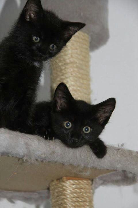 Two little cuties! Black Cats Bring Good Luck <3