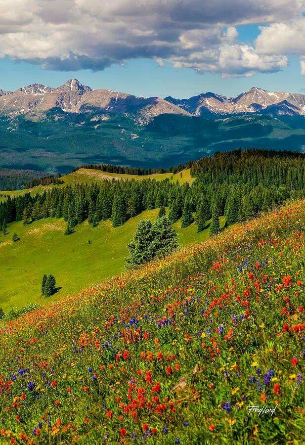 Shrine Pass in Vail, Colorado                              …