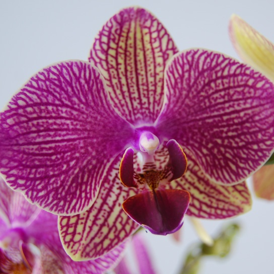 Orchidee Nederland 24 Best Close Ups Images On Pinterest | Flowers, Orchid