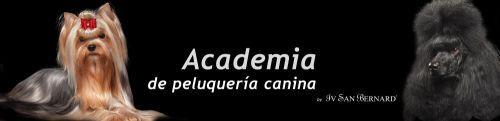 Academia de peluquería canina Maskokotas #Academia #Escuela #Peluquería #Canina #Valencia #Formación