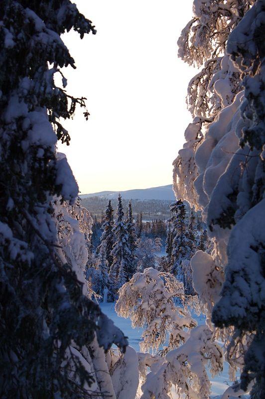 "Forests of Härjedalen, Sweden (""The Return of the Dancing Master"" - Nehhihg Mankell)"