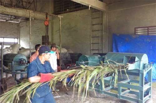 pelepah kelapa sawit ini berfungsi untuk mencacah batang sawit menjadi potongan kecil-kecil untuk diolah lagi menjadi pakan ternak atau juga digunakan sebagai bahan baku dalam pembuatan kompos.