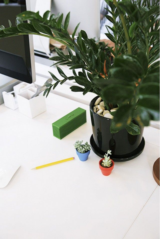 The+Best+Low+Light+Plants+for+Your+Desk+via+@domainehome