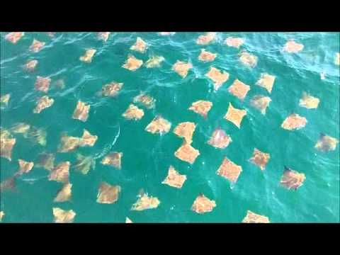 Parasailors were soaring above the water when they looked down and saw this mystifying sight | Rare
