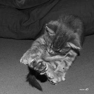 ONLOOKER : cat