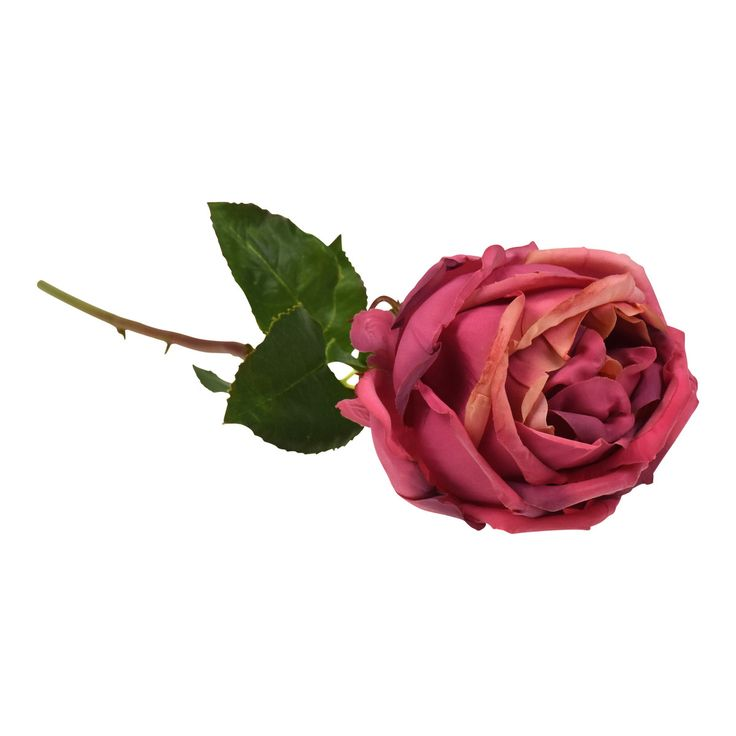 York Rose. Muted deep pink traditional rose. Lovely as a bunch or mixed with other flowers.