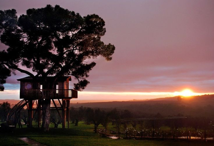 treetop house sunset