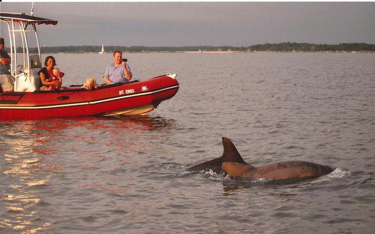 South Beach Marina Hilton Head Dolphin Cruise