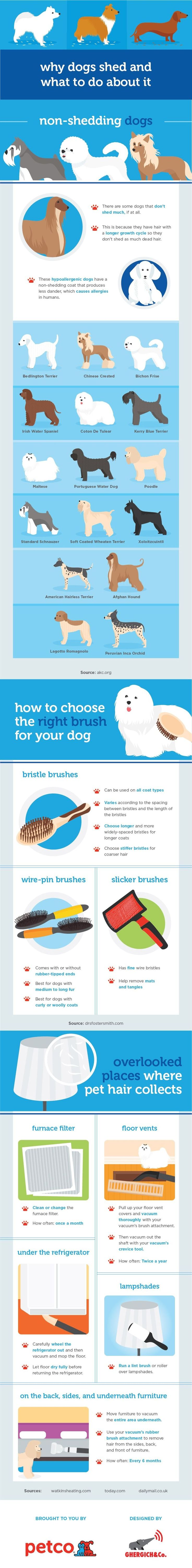 best 25 dog shedding ideas on pinterest itchy dog remedies dog