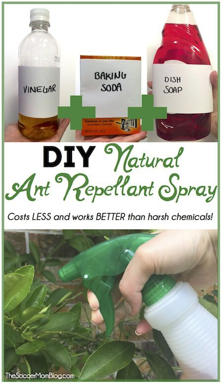 Forget harsh chemicals! This DIY All Natural Ant Repellant Spray is safe, cheap, and IT WORKS!