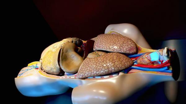Como tratar a esofagite com tratamentos naturais