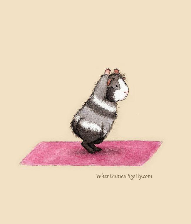 Yoguineas yoga guinea pigs chair pose