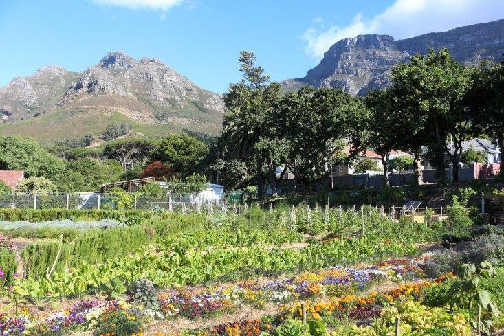 Table-Mountain-oranjezicht-city-farm-gardenista.