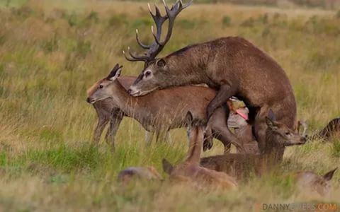 mating animals: 25 тыс изображений найдено в Яндекс.Картинках