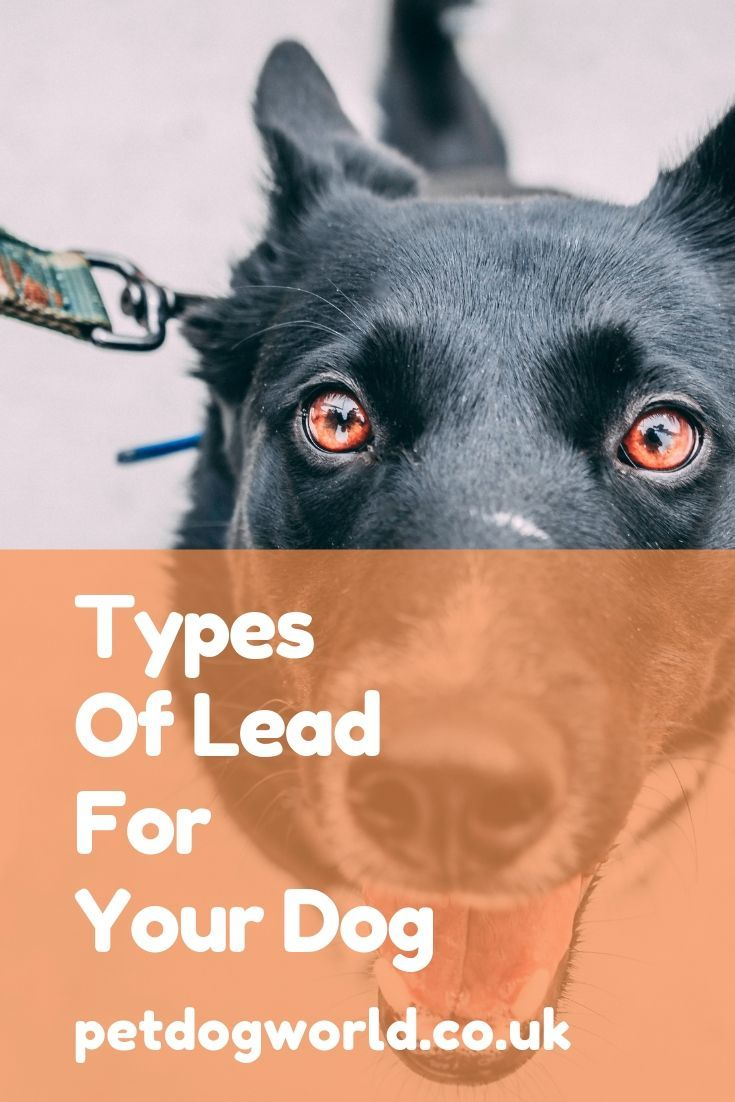 Types Of Lead For Your Dog Your Dog Types Of Lead Dogs Of The