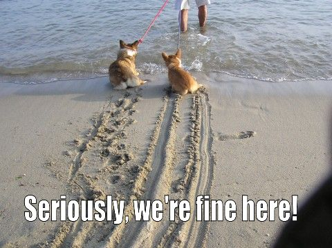 Corgis!: At The Beaches, Funny Image, Funny Dogs, Cars Humor, The Ocean, Funny Stuff, Dogs Pictures, Funny Animal, So Funny