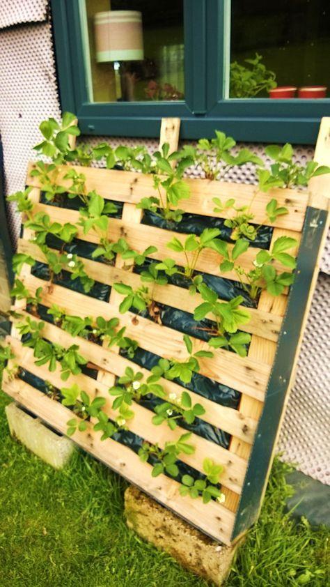 des fraisiers sans limaces jardin et serres pinterest. Black Bedroom Furniture Sets. Home Design Ideas
