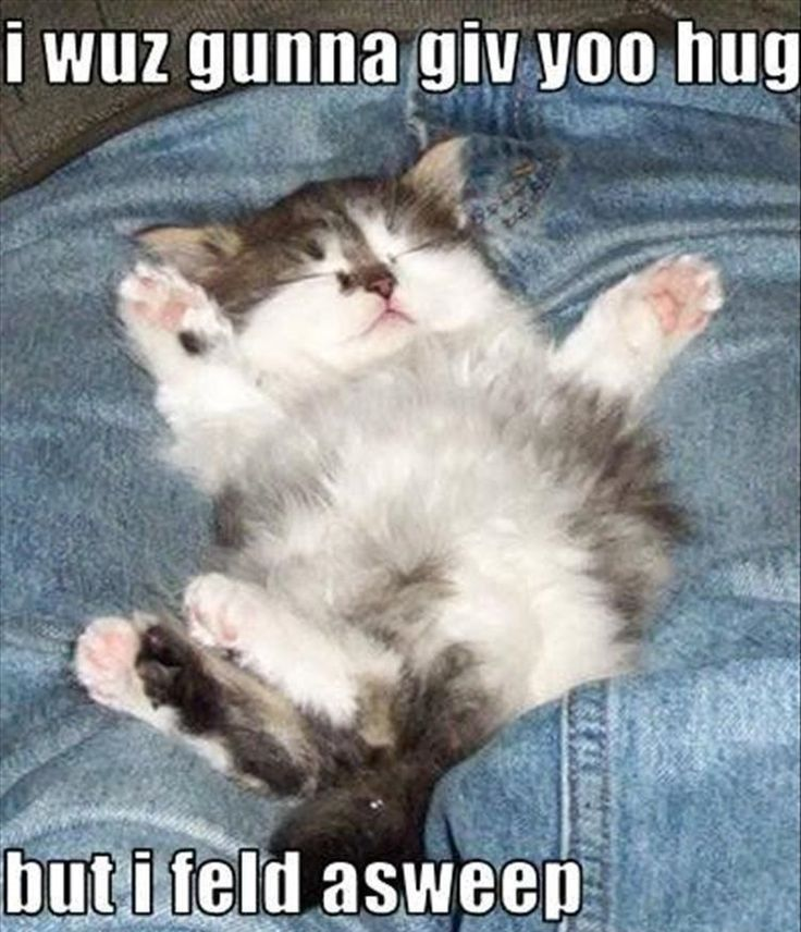 Best Kitten Memes Images On Pinterest Funny Cats Animal - 32 hilarious tumblr posts about animals that will make your day so much better