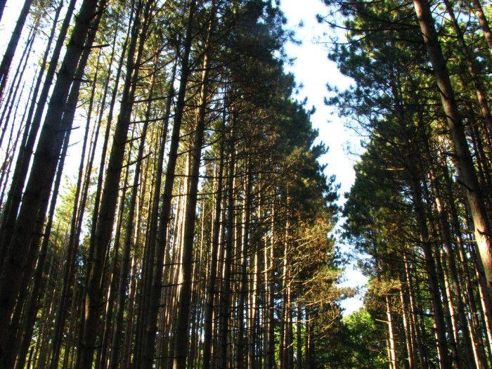 5. Oak Openings (Swanton)