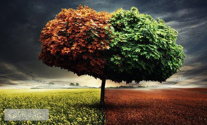 Grupart.pl - drzewo - Na ścianę - Fotografia