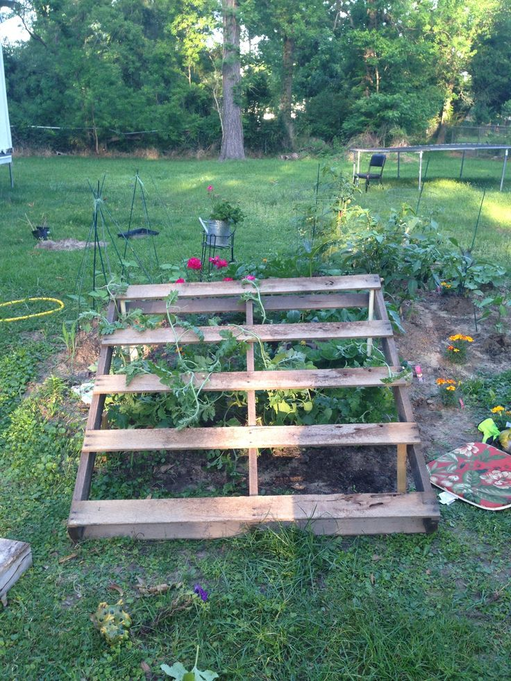 Pallet to let my cantaloupe and watermelon grow on my for What to grow in a pallet garden