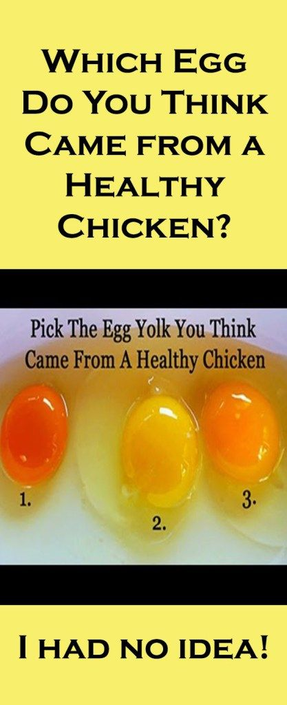 Which Egg Do You Think Came from a Healthy Chicken?