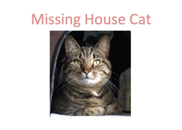 missing cat poster template