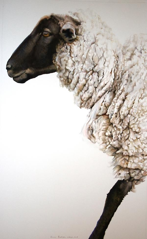 Sheep with black face and legs and white fleece Ann Balch Watercolor