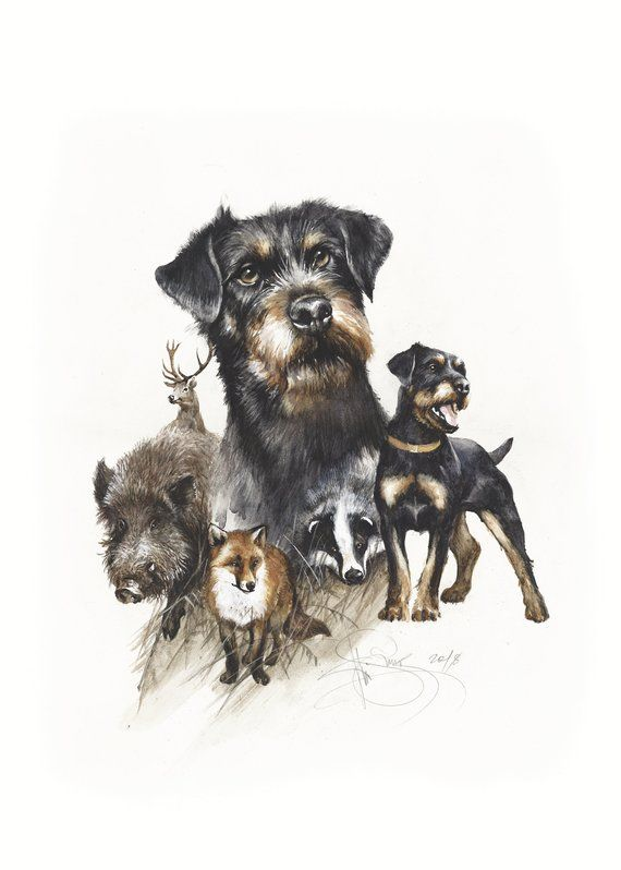 Watercolor Print Jagdterrier By Valery Siurha Hunting Dogs