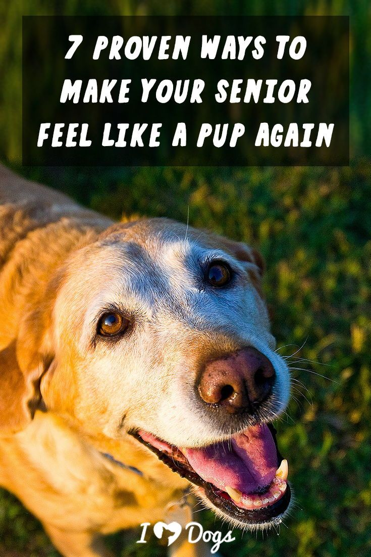 7 Proven Ways To Make Your Senior Feel Like A Pup Again Dog Care Dogs Old Dogs