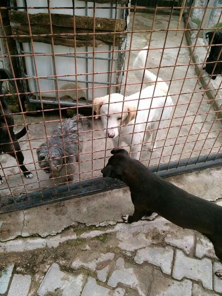 Hayvan barınağı izmir