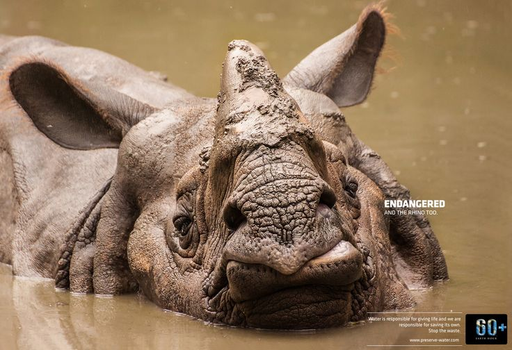 Read more: https://www.luerzersarchive.com/en/magazine/print-detail/earth-hour-60052.html Earth Hour Endangered. And the rhino too. Water is responsible for giving life and we are responsible for saving its own. Stop the waste. Campaign for a project initiated by the Tags: Publimark Mullen Lowe, San Jose,Franklin Guevara,Felipe De La Parra,Esteban Mata Bustamante,Earth Hour,Javier Zeledon,Victor Rosas,Fernando Solórzano,Andras Kiss
