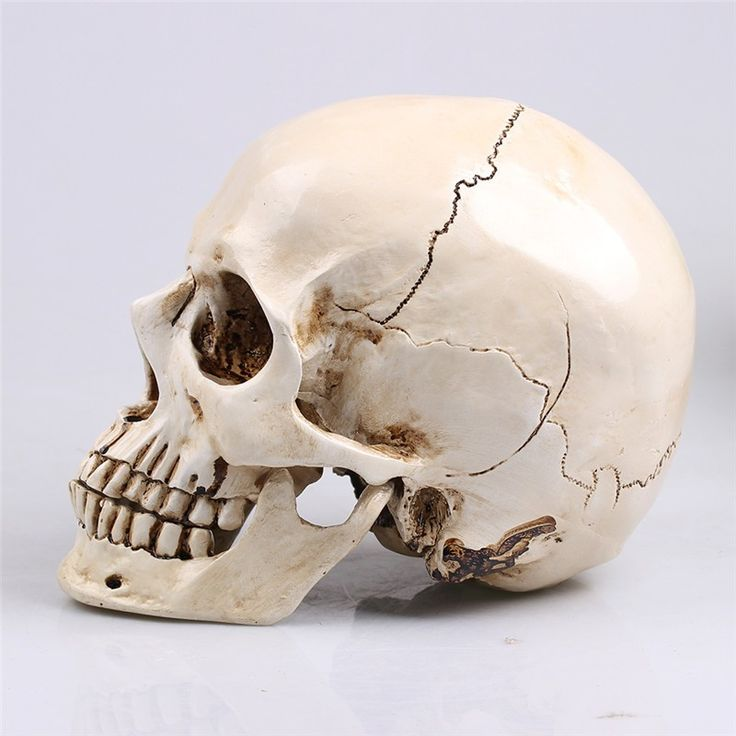 1: 1 human skull model life size resin skull model art class model teaching delicate human skeleton model