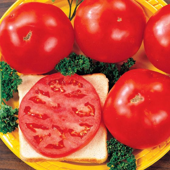 Tomato Lovers Special