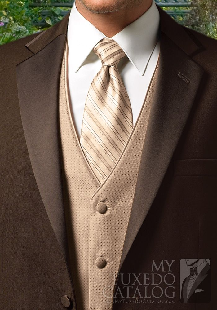 Chocolate 'Premier' Tuxedo
