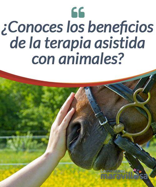 ¿Conoces los beneficios de la terapia asistida con animales?  Seguramente has oído hablar de la terapia asistida con animales. No obstante hagamos antes una pequeña reflexión acerca ellos.