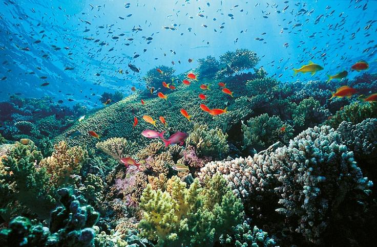 #MarRosso - Barriera Corallina di Marsa Alam, Egitto.