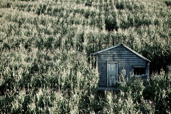 #47 Go through a cornfield maze