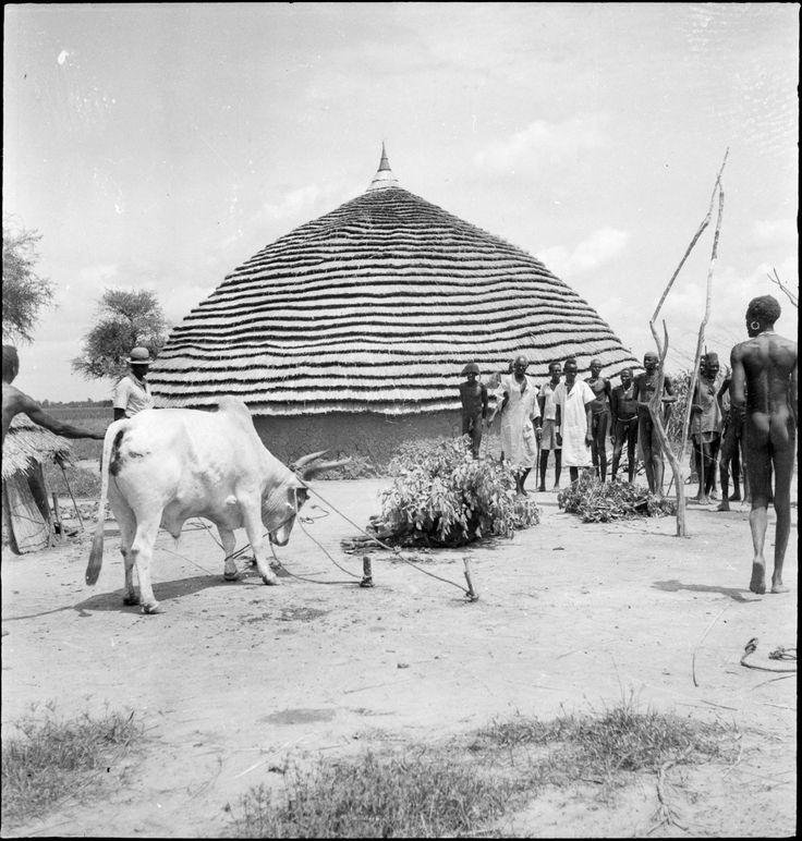Godfrey Lienhardt Date Of Photo: 1947