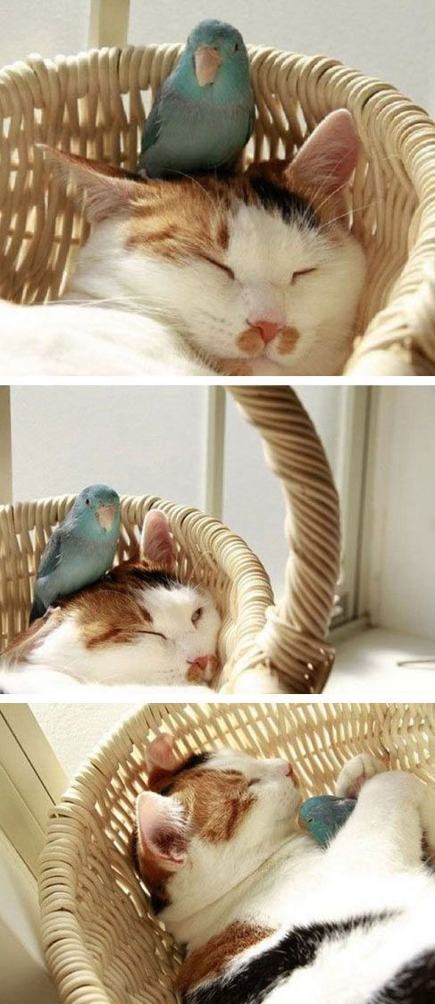 The oddest napping buddies…