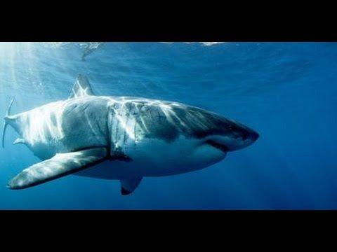 https://www.youtube.com/watch?v=jW0dljY8sxE   #Discovery Channel (TV Network) #doku #Dokumentation #tiere