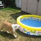 This is what Otis did when he saw his new pool...