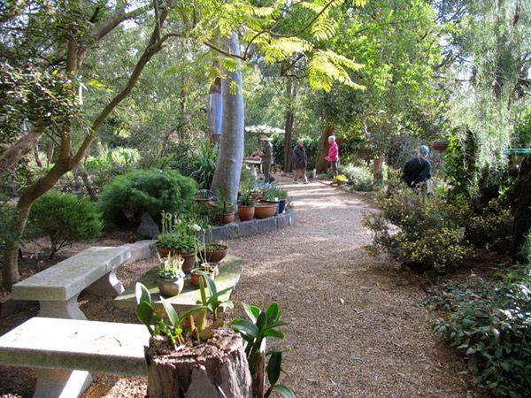1299 best Australian Native Gardens images on Pinterest Native